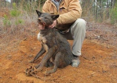 Mick Beder killing a dog