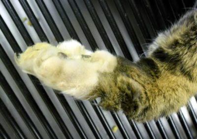 cat-paw-injury
