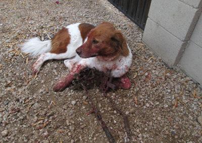 dog trapping victim injury