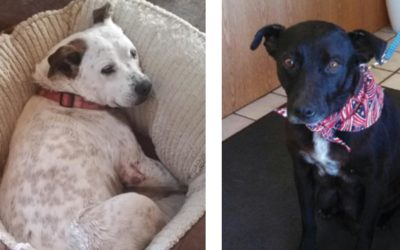Tragedy for a Dog and Her Family Proves Traps Have No Place in Our State