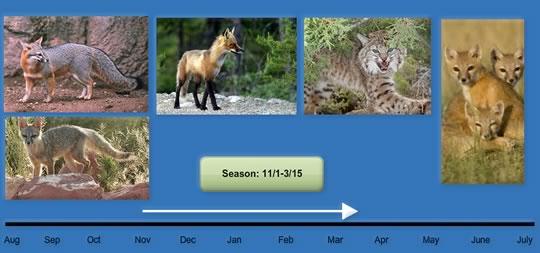 season-11-1-3-15-2-1