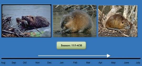 season-11-1-4-30-1