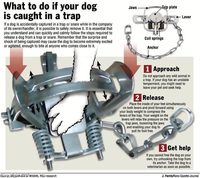 what to do if your dog is caught in a trap