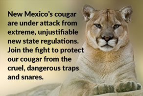 Stop Cougar Trapping