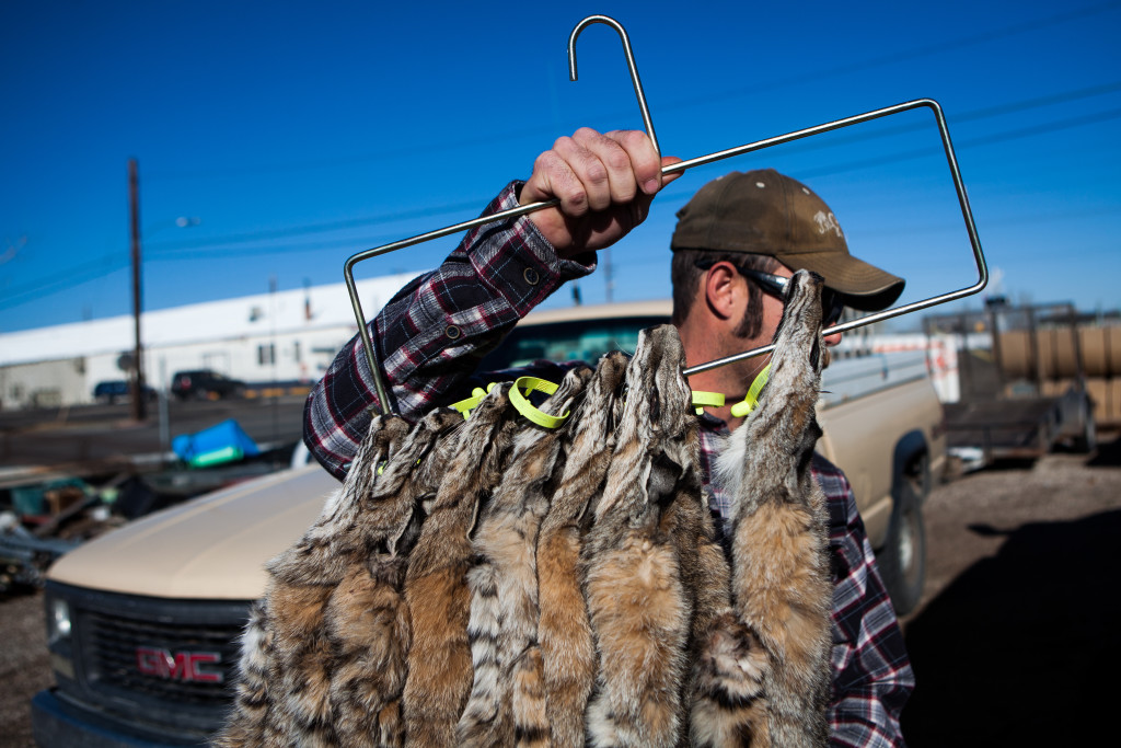 America's trapping boom relies on cruel and grisly tools