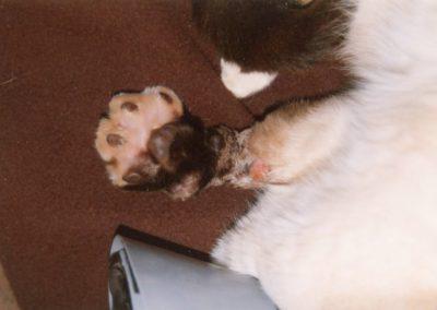 usda_cat_lost_leg_in_trap