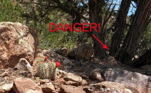 danger-traps
