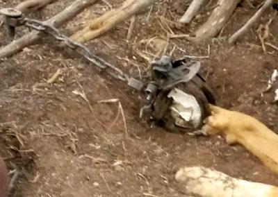 dog paw in trap - Patty Foy