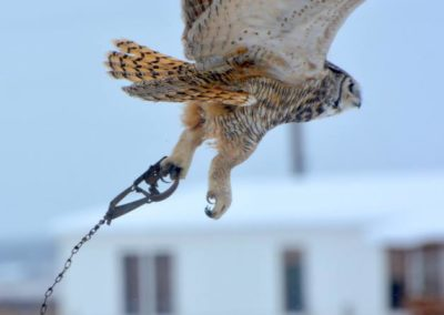 flying owl w trap on foot