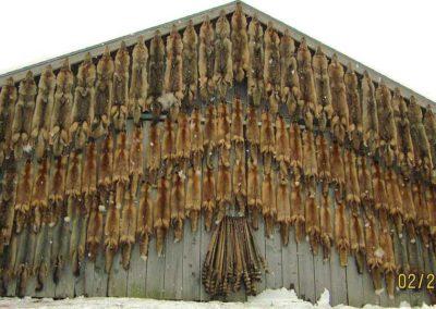 pelts-mass-killing-of-wildlife-1024x538