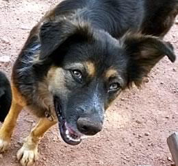 Roxy dog trap victim