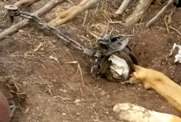 This is what is sounds like when a dog gets trapped
