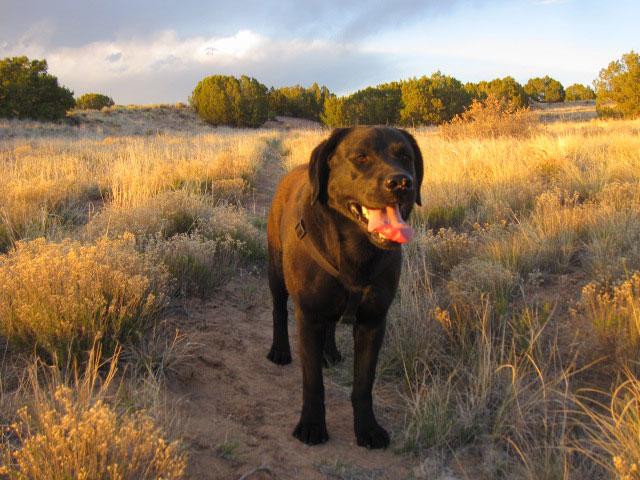 dog-trapped-Mar-11-2018--blm-land--near-Nambe