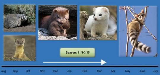 season-11-1-3-15-1