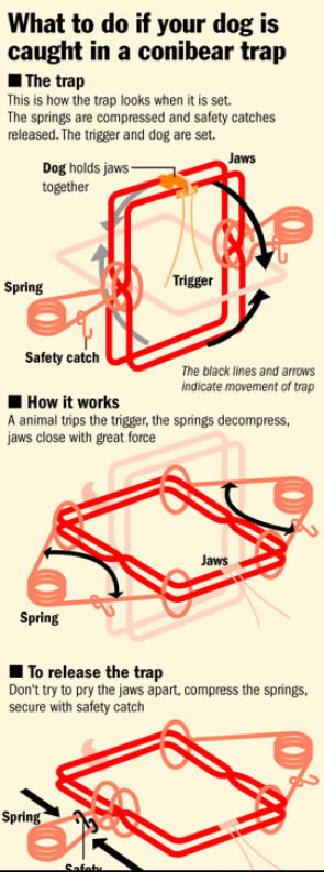what to do if your dog is caught in a conibear trap