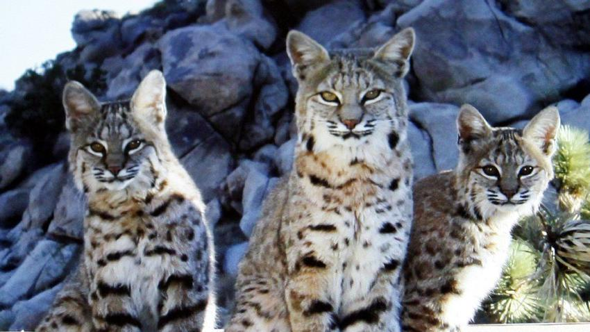 Lawsuit aims to end commercial fur trapping in California