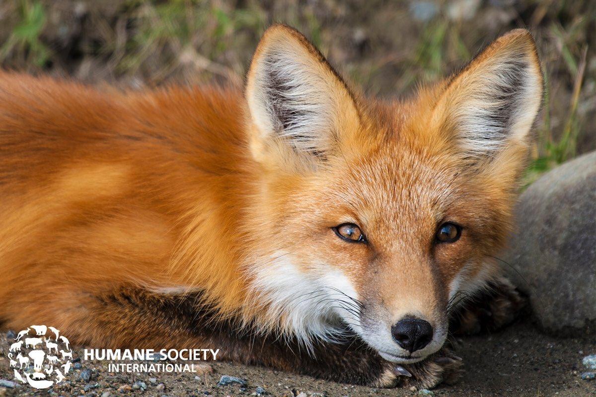 Norway bans fur farms