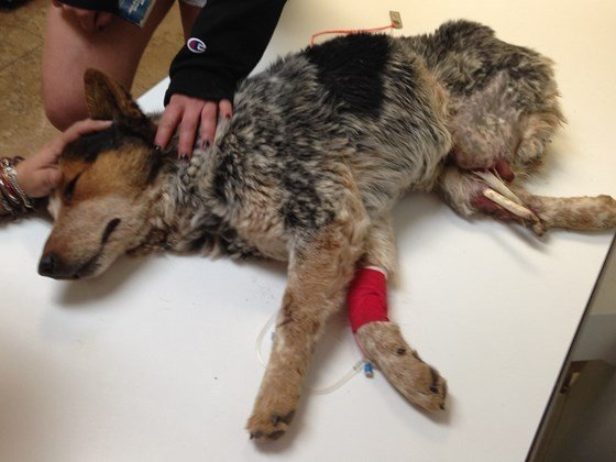 Dog's Former Owner Arrested for Extreme Animal Cruelty