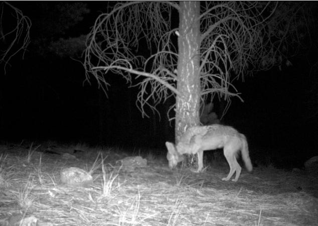 NM trapping laws not in step with NM values