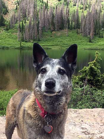 Albuquerque Journal Editorial: Let this latest trapping death of a pet be NM's last
