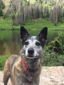 Case against trapper of Roxy the dog dismissed
