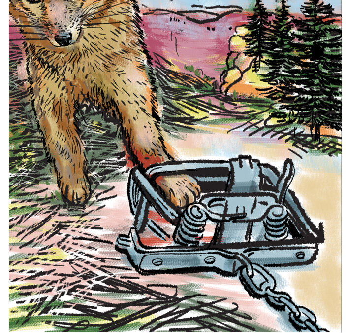 Editorial: Updated trapping regs just sidestepping gruesome NM reality