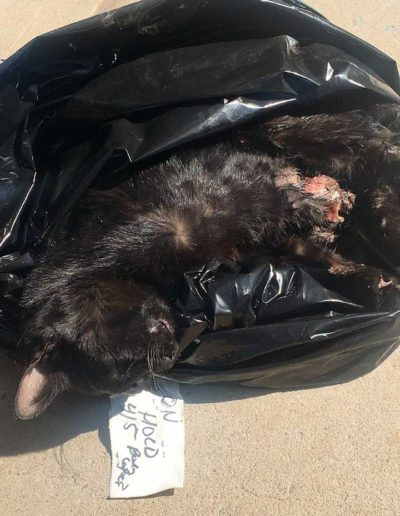 Cat died of trap wounds