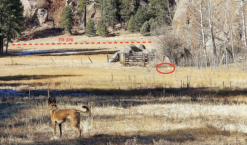 Albuquerque Journal: Dogs caught in traps rekindle debate in NM