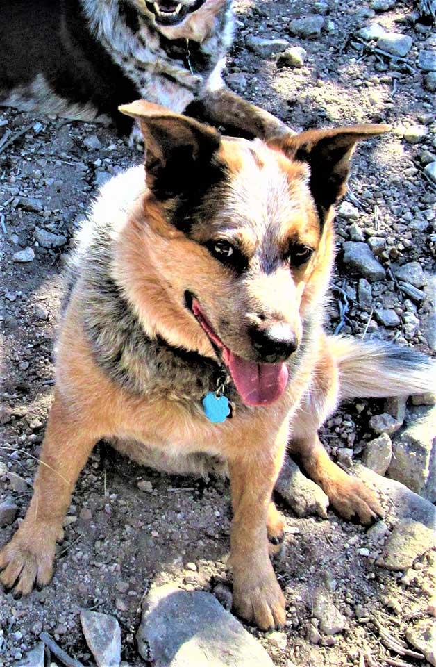 dog trap victim