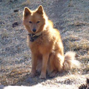 Dog trap victim January 2021